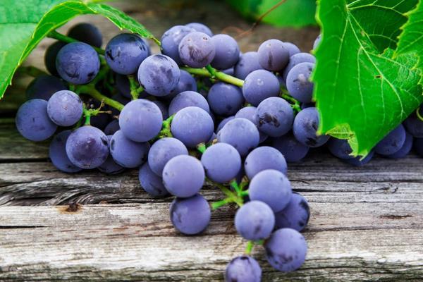 葡萄成熟时间是什么时候 葡萄是什么季节的水果插图(1)