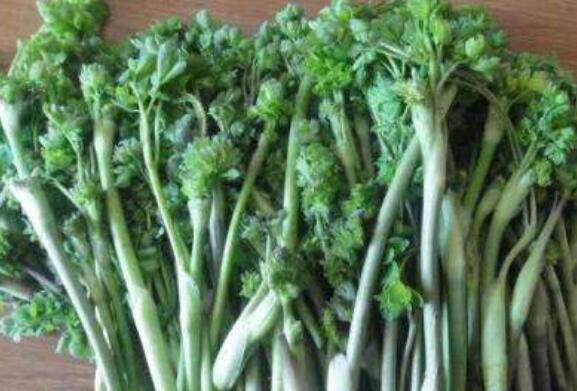 五爪子野菜的功效与作用插图