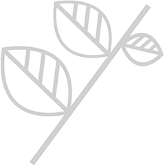 蒲黄炭 Sheet-2
