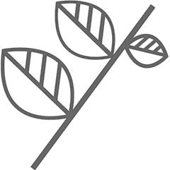 干姜、阿胶(炙)各3片
