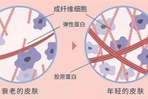 功能性阿胶低聚肽,能为阿胶行业带来新的生机吗?