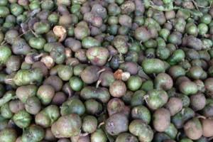 绿茶籽的功效与作用有哪些【绿茶籽百科】