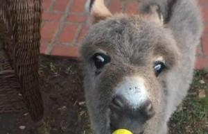 我有一只小毛驴,我从来都舍不得骑~真可爱!