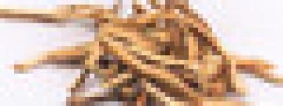 阿胶中药方剂:参茸保胎丸
