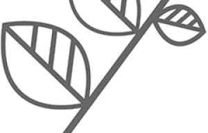 阿胶中药方剂:驴胶补血颗粒