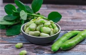 什么人不能吃蚕豆
