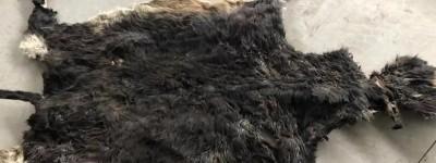 阿胶从牛皮到驴皮的转变过程